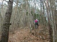 大ノ姿山樹林帯の急登