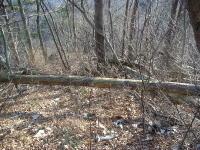 倒木がルートを塞ぐ
